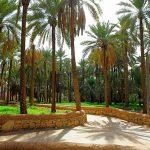 اجمل مزرعه في السعوديه , اروع بستان في القصيم