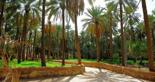 صور اجمل مزرعه في السعوديه , اروع بستان في القصيم