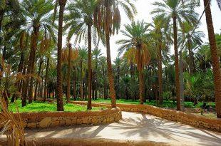 صوره اجمل مزرعه في السعوديه , اروع بستان في القصيم