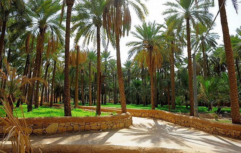 صورة اجمل مزرعه في السعوديه , اروع بستان في القصيم