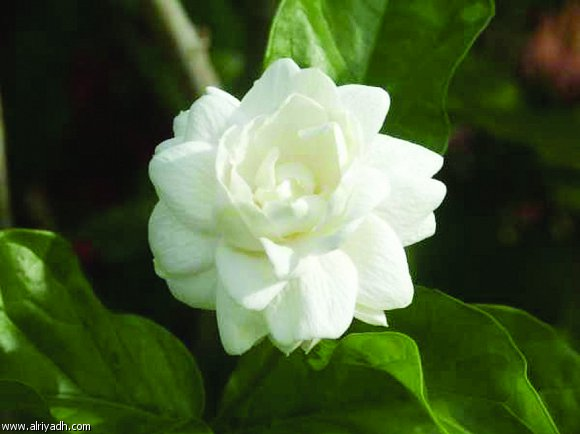 صورة علمتني الورود اجمل كلمات في الحياه , مجموعة من الازهار المعبرة عن المشاعر