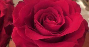 علمتني الورود اجمل كلمات في الحياه , مجموعة من الازهار المعبرة عن المشاعر