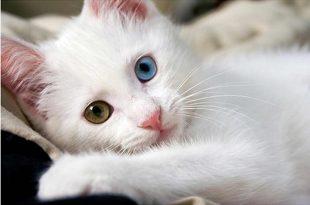 صوره اجمل قطه بالعالم , صور لقطط روعة