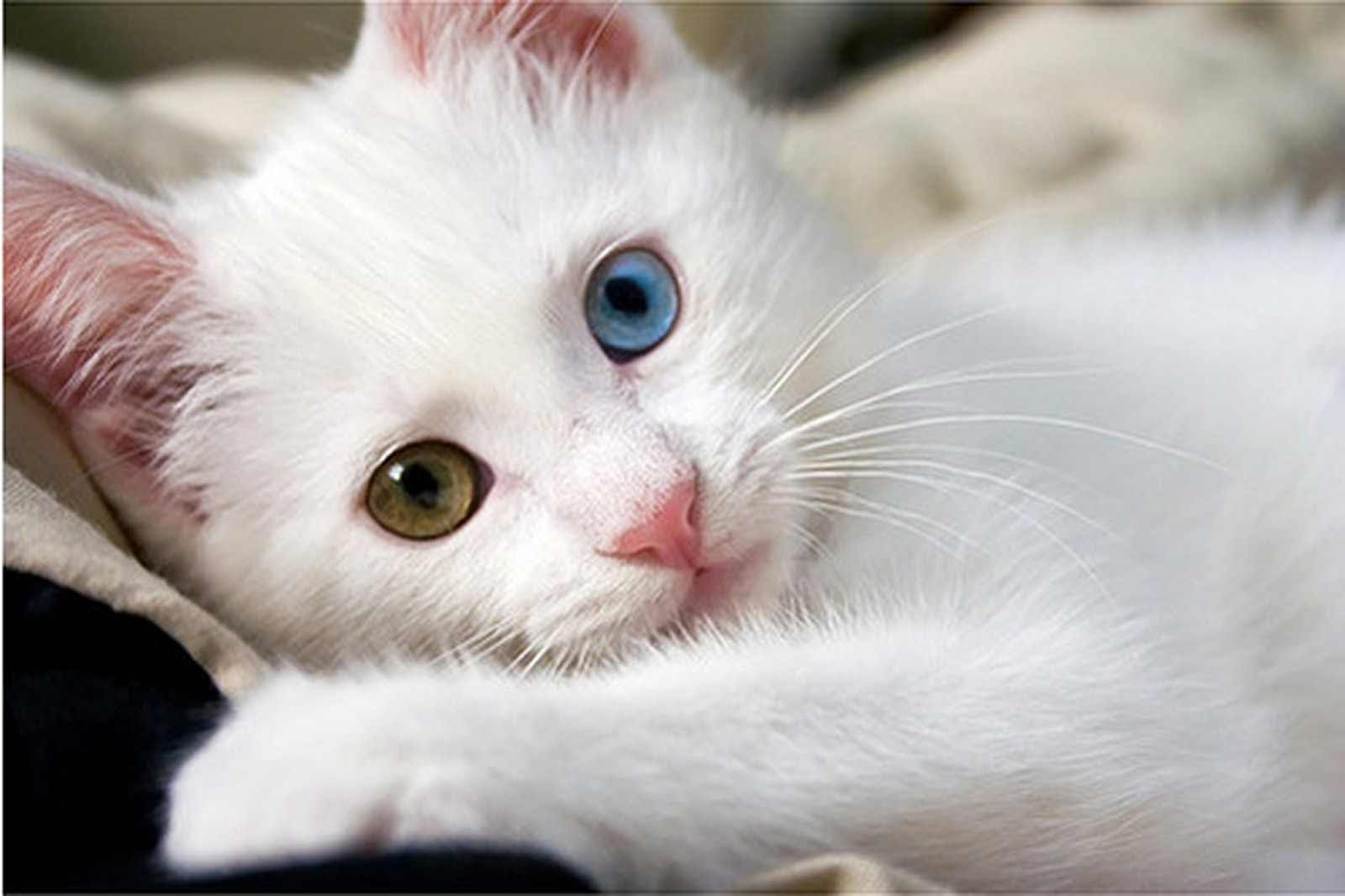 صورة اجمل قطه بالعالم , صور لقطط روعة