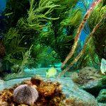 صور تحت الماء , اجمل الصور في اعماق البحار