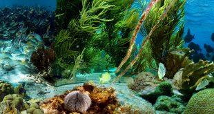 صوره صور تحت الماء , اجمل الصور في اعماق البحار
