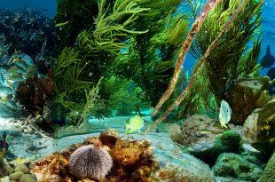 صورة صور تحت الماء , اجمل الصور في اعماق البحار