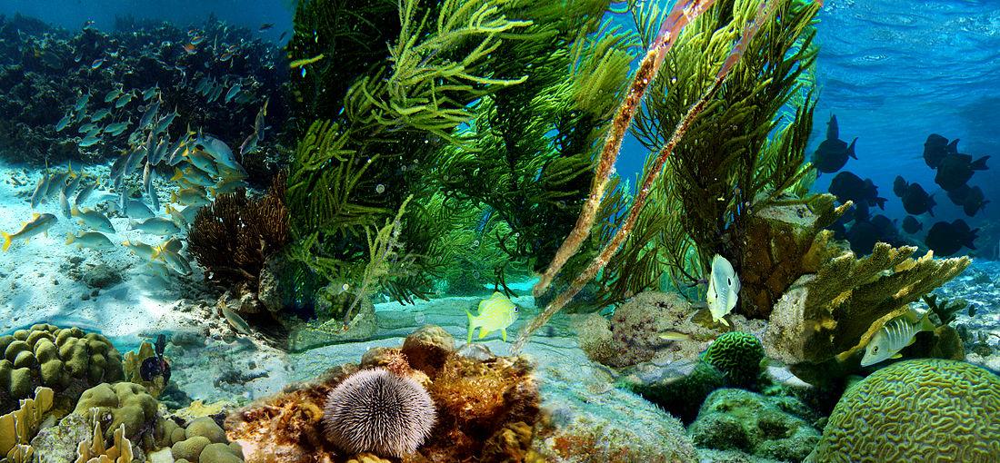 صور صور تحت الماء , اجمل الصور في اعماق البحار