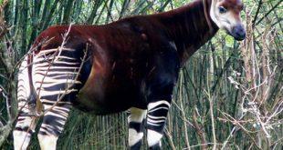 صوره صور حيوانات غريبة , غرائب وعجائب عالم الحيوان