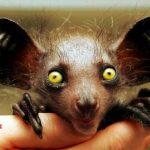 حيوانات نادرة وغريبة , صور عجائب عالم الحيوان
