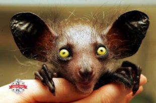 صوره حيوانات نادرة وغريبة , صور عجائب عالم الحيوان
