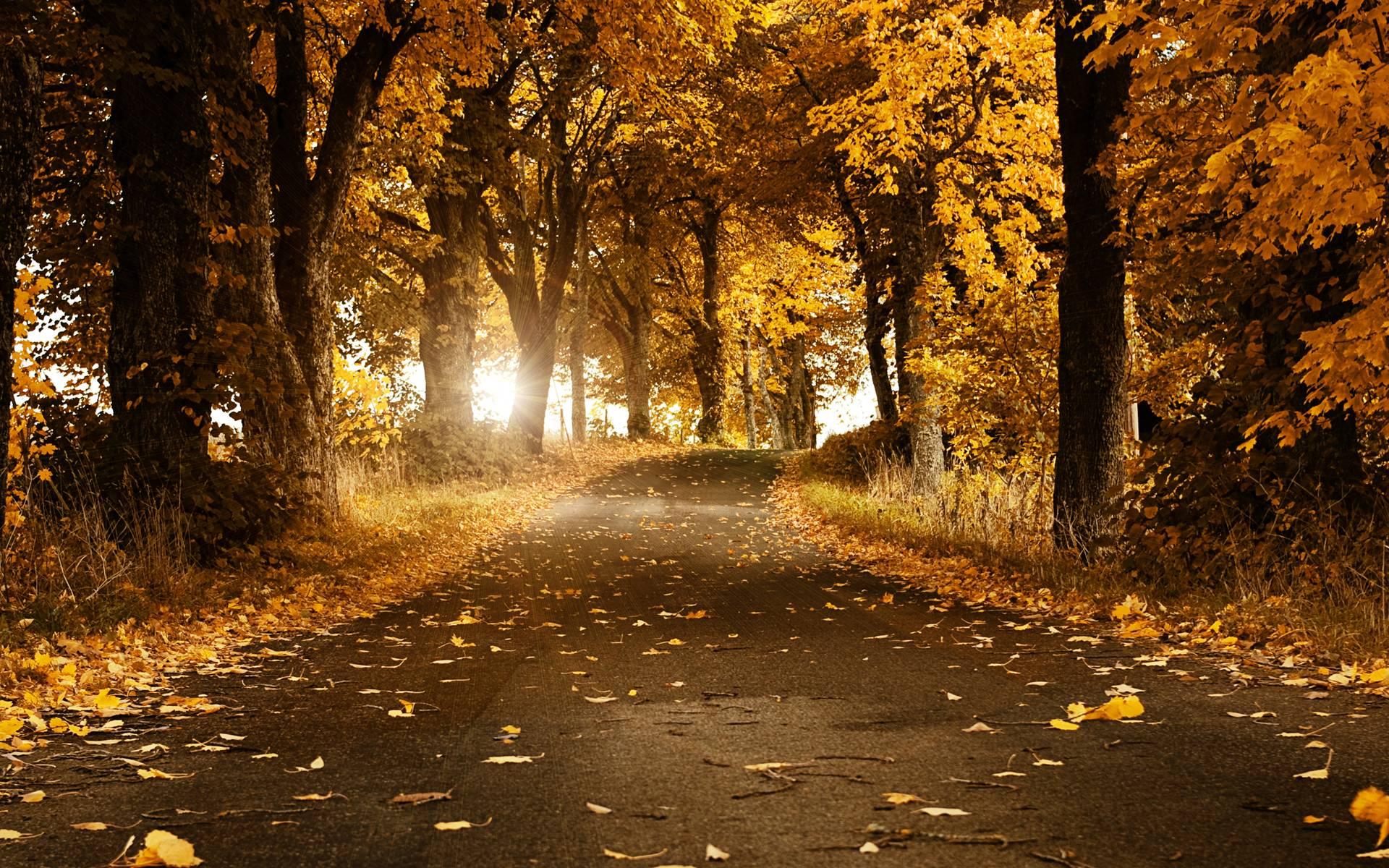 بالصور صور طبيعة جميلة , احلى خلفيات اشجار وسماء وبحار روعه 10510 10