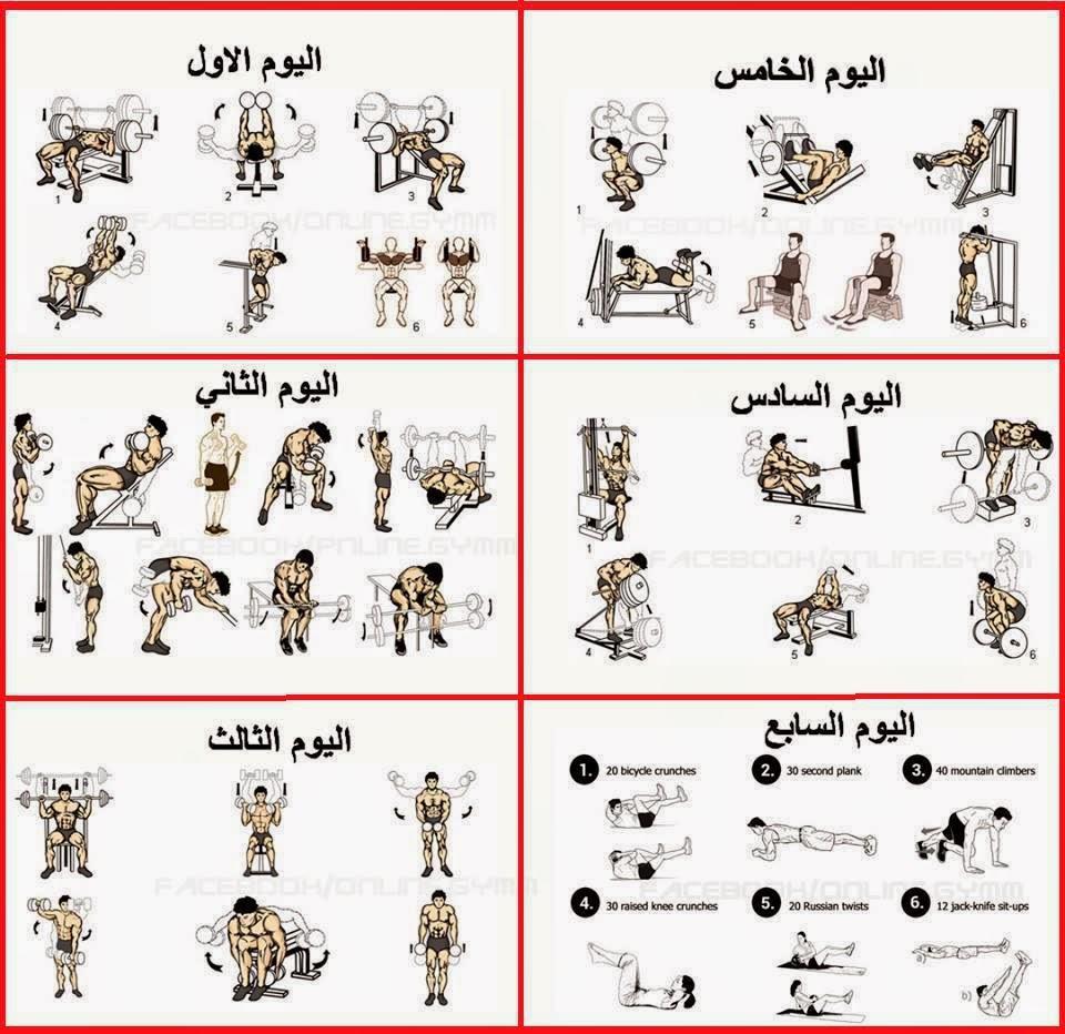 صورة حركات كمال الاجسام صور تمارين كمال الاجسام , اهم رياضة للجسم