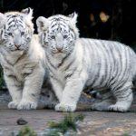 صور جميلة للحيوانات , خلفيات رائعةو معبرة لعالم الحيوان
