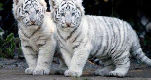صوره صور جميلة للحيوانات , خلفيات رائعةو معبرة لعالم الحيوان