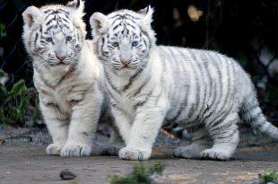 صورة صور جميلة للحيوانات , خلفيات رائعةو معبرة لعالم الحيوان