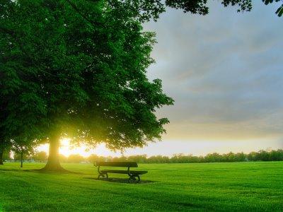 صوره صور باللون الاخضر , احدث خلفيات جميلة خضراء تجذب الانتباه