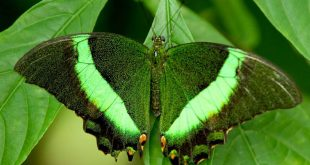 صور باللون الاخضر , احدث خلفيات جميلة خضراء تجذب الانتباه