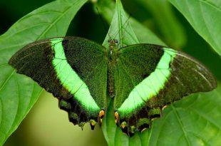 صورة صور باللون الاخضر , احدث خلفيات جميلة خضراء تجذب الانتباه