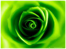 صورة صور باللون الاخضر , احدث خلفيات جميلة خضراء تجذب الانتباه 720 2