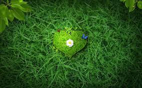 صورة صور باللون الاخضر , احدث خلفيات جميلة خضراء تجذب الانتباه 720 4