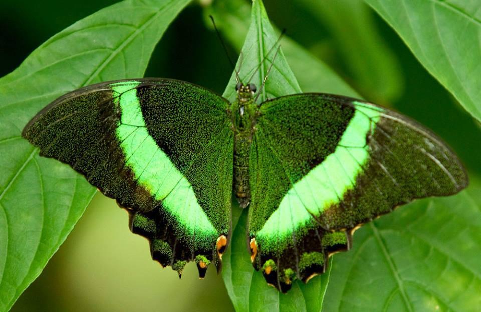 صورة صور باللون الاخضر , احدث خلفيات جميلة خضراء تجذب الانتباه 720
