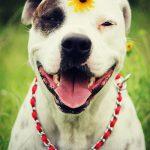 صور كلاب تجنن , اجمل صور الكلاب بمختلف الانواع