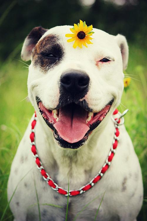 صوره صور كلاب تجنن , اجمل صور الكلاب بمختلف الانواع
