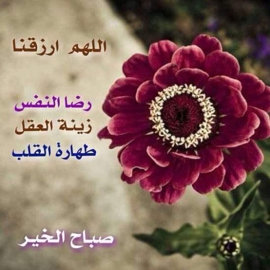 بالصور صباح الخير صور روعه , صور صباح الخير جميلة 842 3