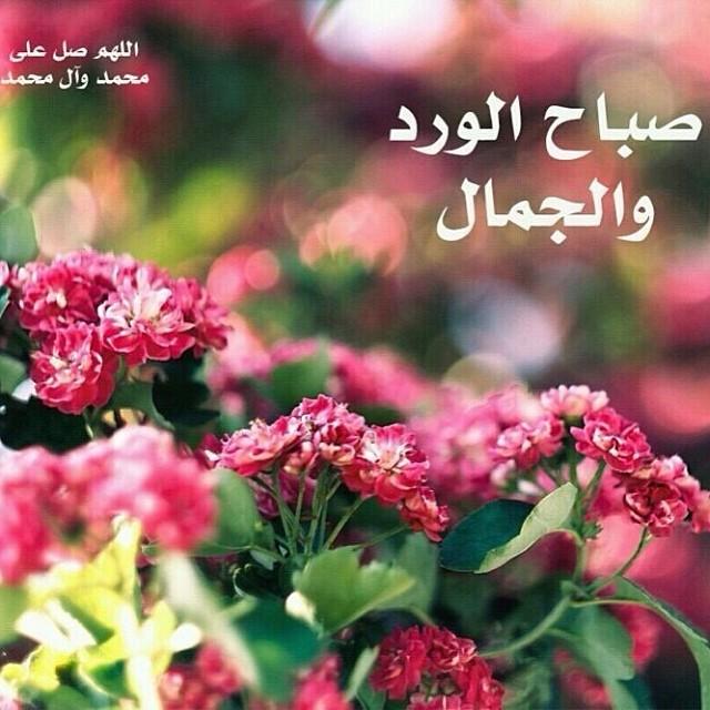 بالصور صباح الخير صور روعه , صور صباح الخير جميلة 842 4
