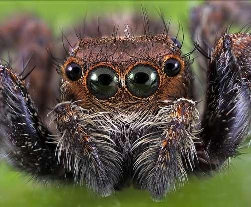صوره اكبر عنكبوت في العالم , وكيف يصطاد فريسته بسهوله
