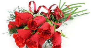 الورد جميل جميل الورد , رائحة ذكية والوان زاهية