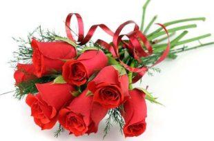 صورة الورد جميل جميل الورد , رائحة ذكية والوان زاهية