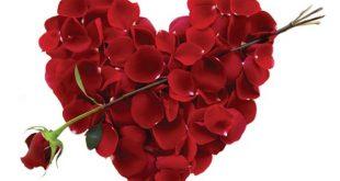 صوره صورورد عيد الحب , يحتفل بهذااليوم عالميا