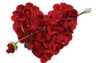 صور صورورد عيد الحب , يحتفل بهذااليوم عالميا