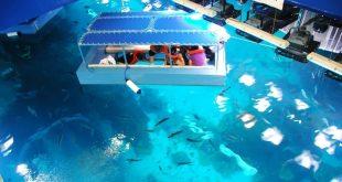 صوره اكواريوم دبي مول , تحفة مائية جديدة تنضم لمعالم دبي السياحية