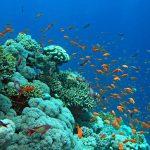 فى اعماق البحار , شاهد عجائب الله فى خلق الكون
