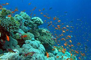 صورة فى اعماق البحار , شاهد عجائب الله فى خلق الكون