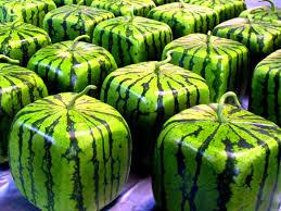 بالصور اغرب الفواكه في العالم , شاهد فاكهة باشكال غريبة 11033 2