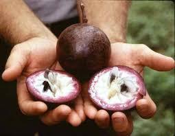 بالصور اغرب الفواكه في العالم , شاهد فاكهة باشكال غريبة 11033 8