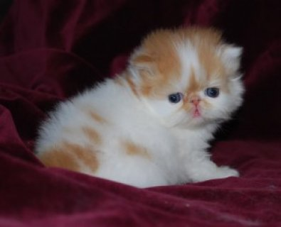 بالصور صور احلى قطط , تعالو نشوف الصور المختلفة لهذة المخلوقات الجميلة 11116 1