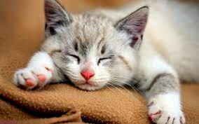 بالصور صور احلى قطط , تعالو نشوف الصور المختلفة لهذة المخلوقات الجميلة 11116 2