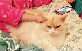 بالصور صور احلى قطط , تعالو نشوف الصور المختلفة لهذة المخلوقات الجميلة 11116 3