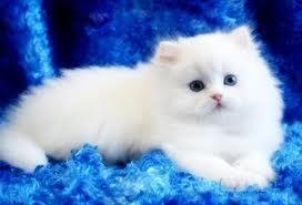 بالصور صور احلى قطط , تعالو نشوف الصور المختلفة لهذة المخلوقات الجميلة 11116 4