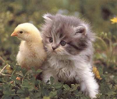 بالصور صور احلى قطط , تعالو نشوف الصور المختلفة لهذة المخلوقات الجميلة 11116 6