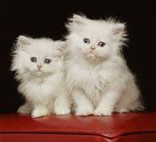 صورة صور احلى قطط , تعالو نشوف الصور المختلفة لهذة المخلوقات الجميلة