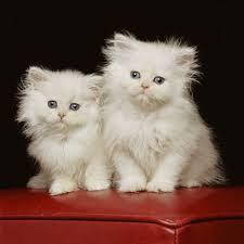 صور احلى قطط , تعالو نشوف الصور المختلفة لهذة المخلوقات الجميلة