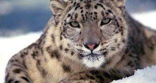 صور خلفيات حيوانات , احلي الكائنات الجميلة