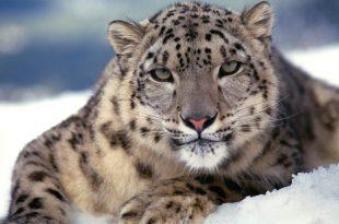 صوره صور خلفيات حيوانات , احلي الكائنات الجميلة