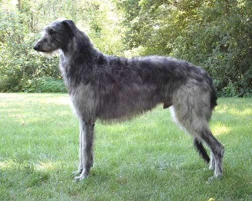 بالصور اضخم كلاب في العالم , تعالو نشوف صور كثيرة ومختلفة 11142 16